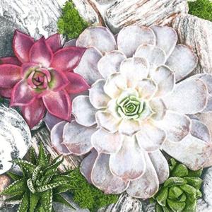 Servítky na dekupáž Succulent Plants and Stones Composition - 1 ks